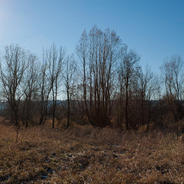 photo of winter trees at Smith and Bybee Wetlands