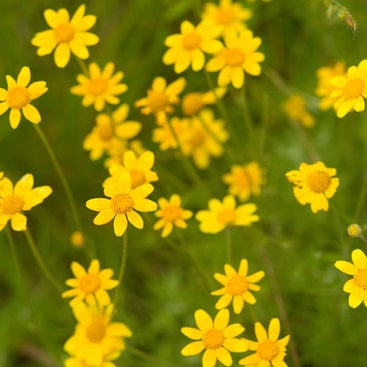 photo of yellow wildflowers