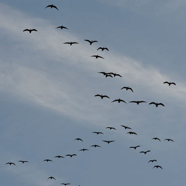 photo of birds flying