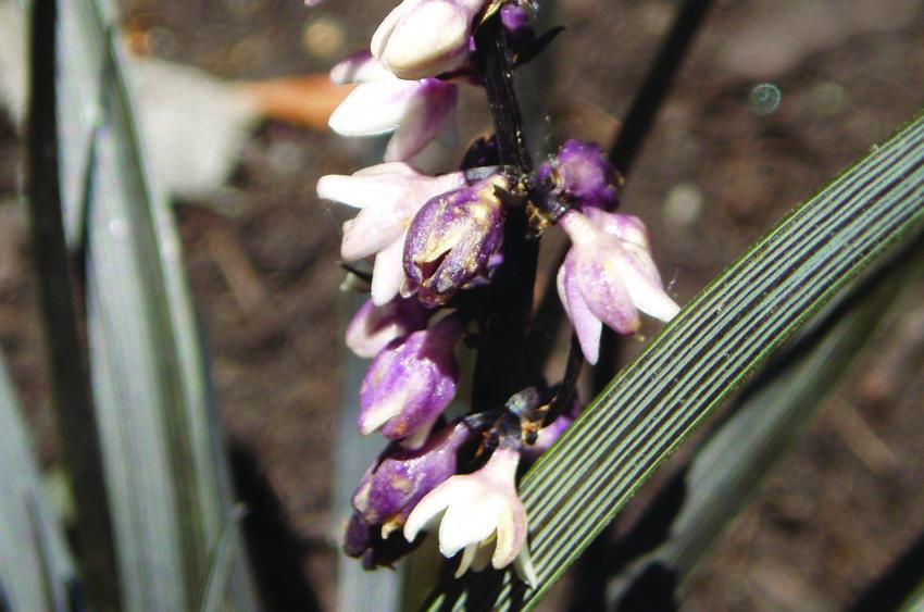 photo of black spot on a flower