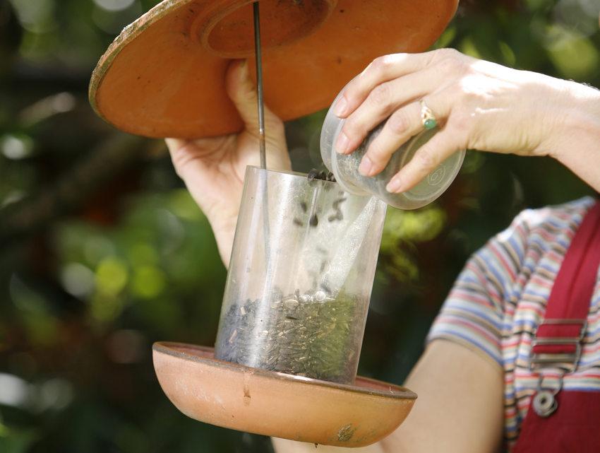 photo of woman filling a bird feeder