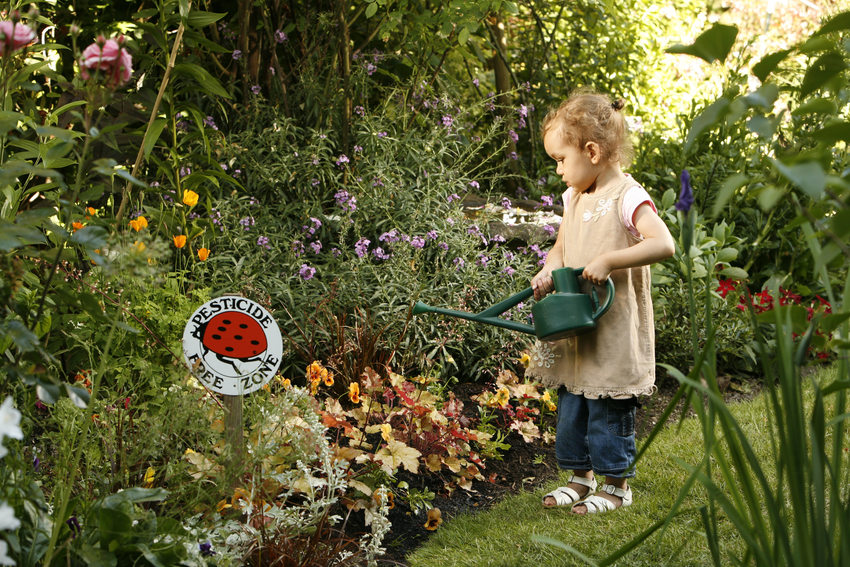 photo of child watering a garden