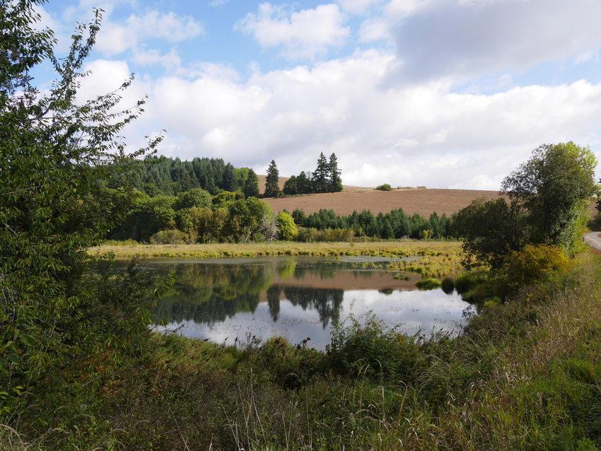 photo of Killin Wetlands