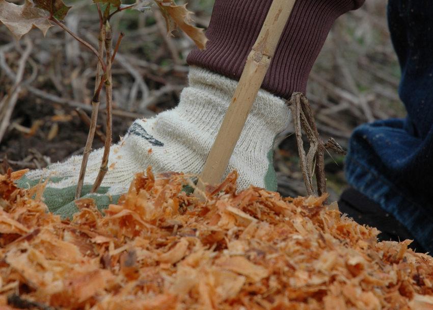 photo of wood mulch