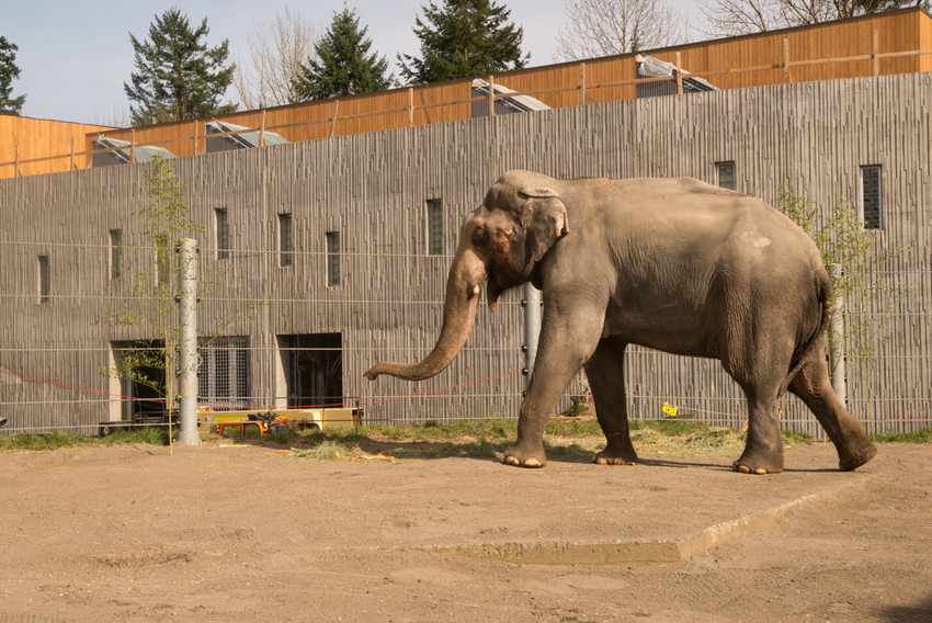 As elephant lands nears completion zoo looks back on a history as elephant lands nears completion zoo looks back on a history making half century malvernweather Image collections