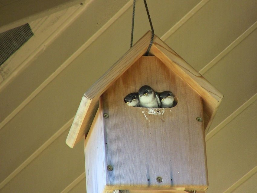 photo of birds peeking out of a birdhouse