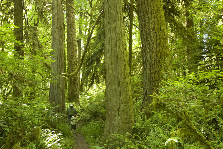 photo of Oxbow Regional Park ancient forest