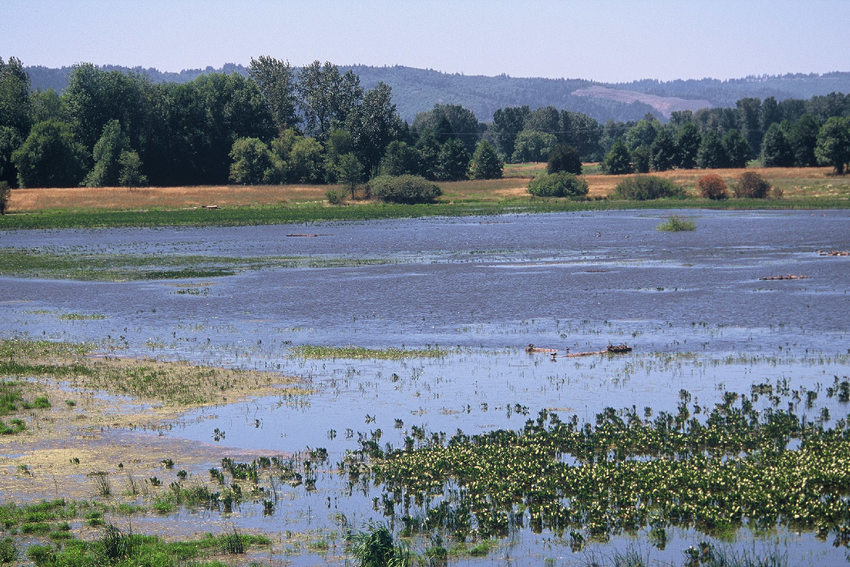 Smith and Bybee Wetlands