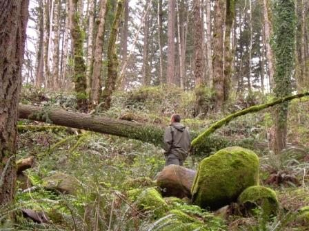 a photo of a person exploring the mossy forest