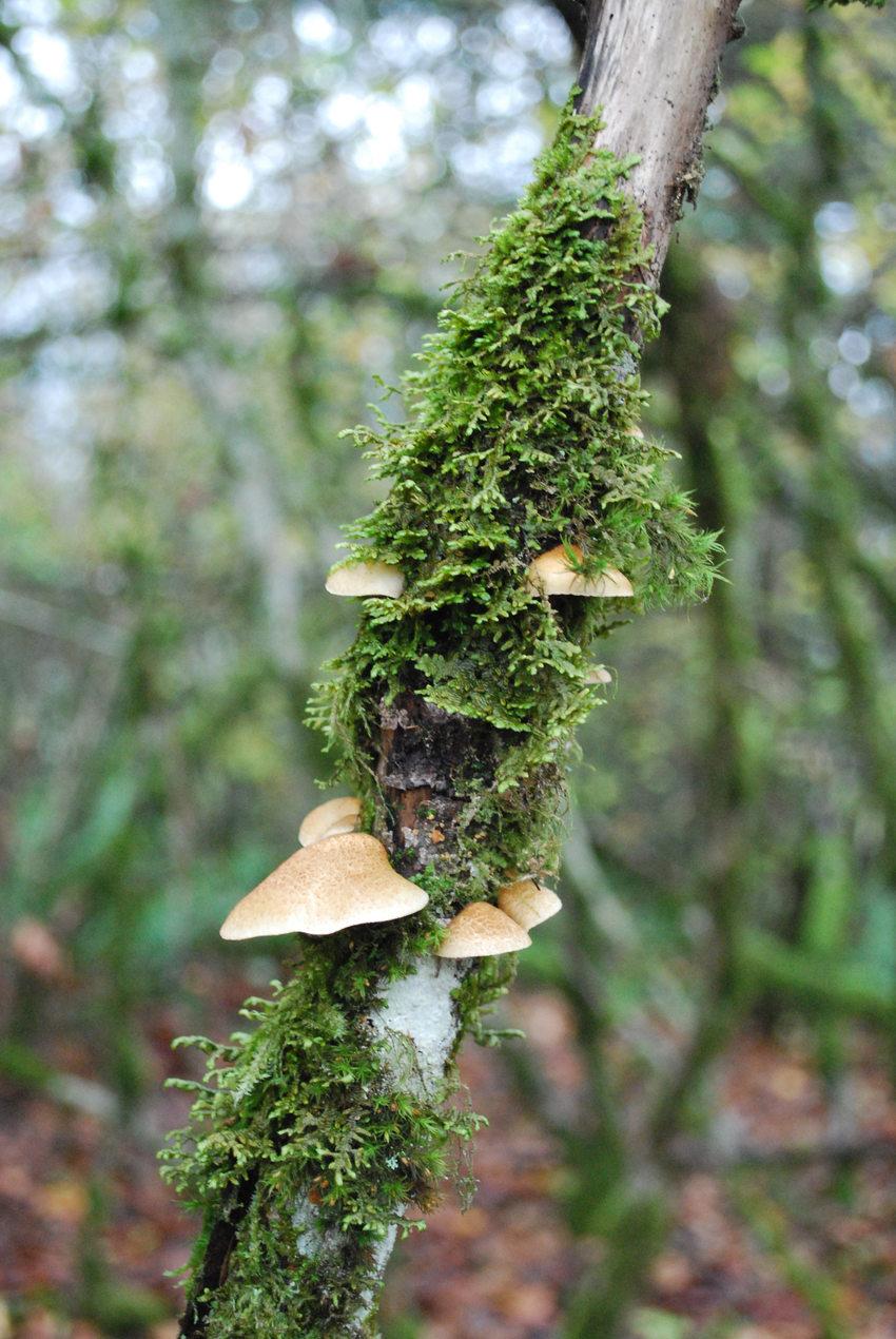 photo of mushrooms on a tree