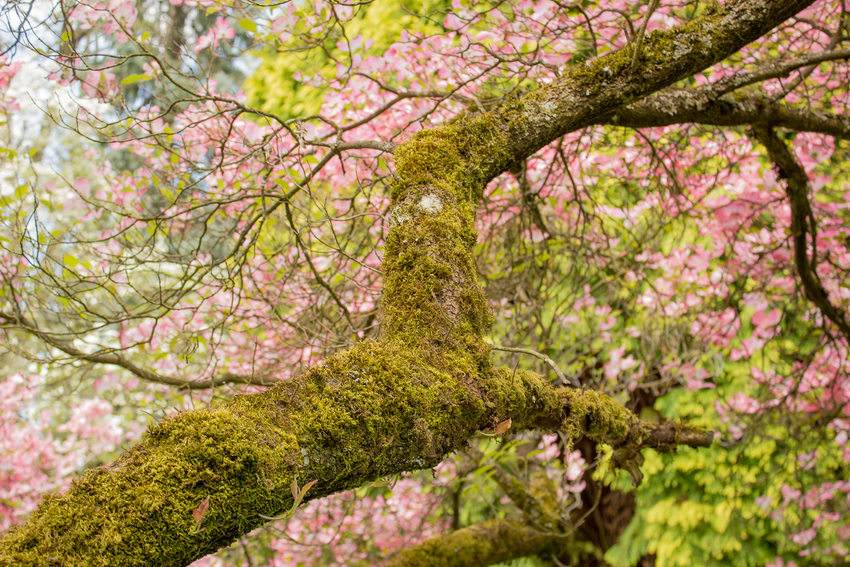 photo of spring at Lone Fir Cemetery