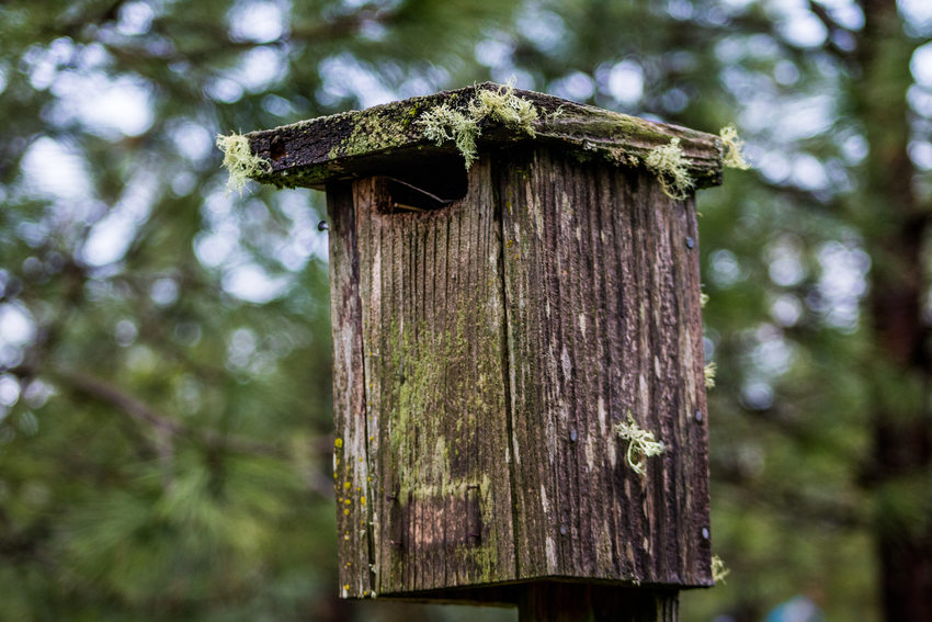 photo of bird houses at Cooper Mountain Nature Park