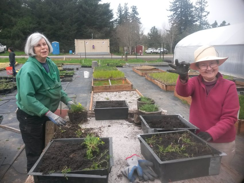 Two volunteers volunteering at Native Plant Center in the spring