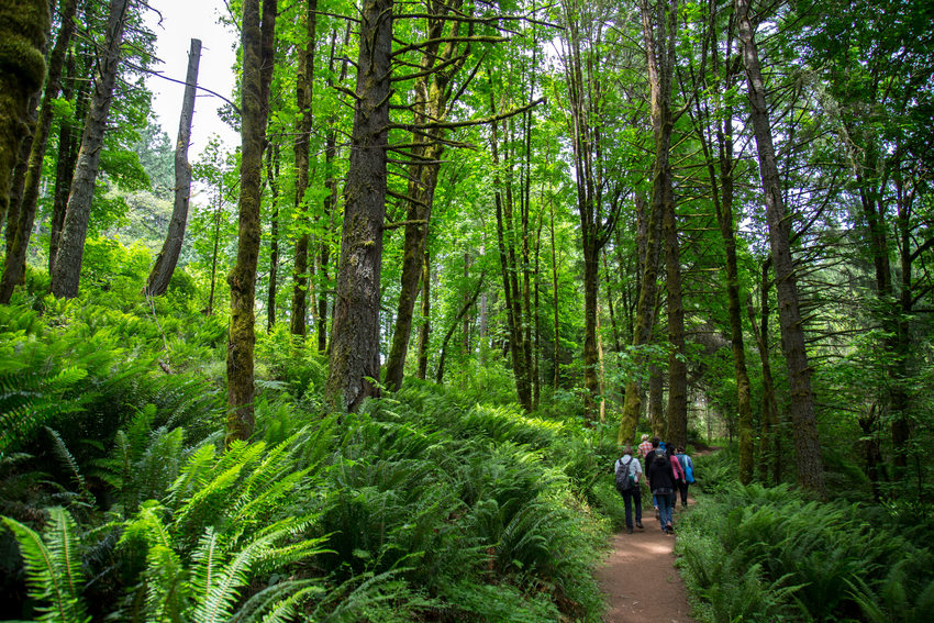 a photo of a group walking through the forest at Scouters Mountain Nature Park