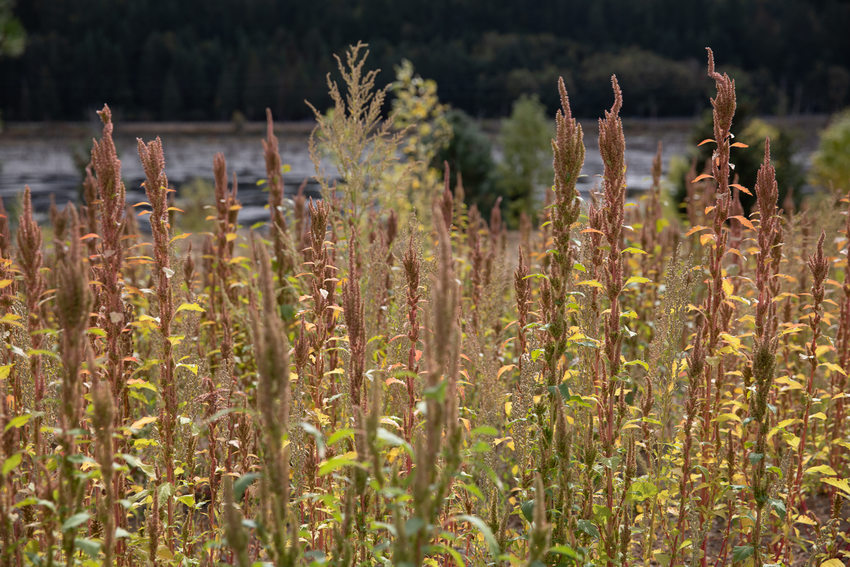 Tall grasses at Killin Wetlands Nature Park