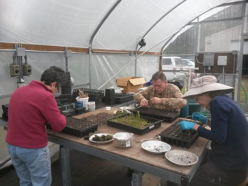 Three volunteers planting seeds at the Native Plant Center during a winter volunteer event
