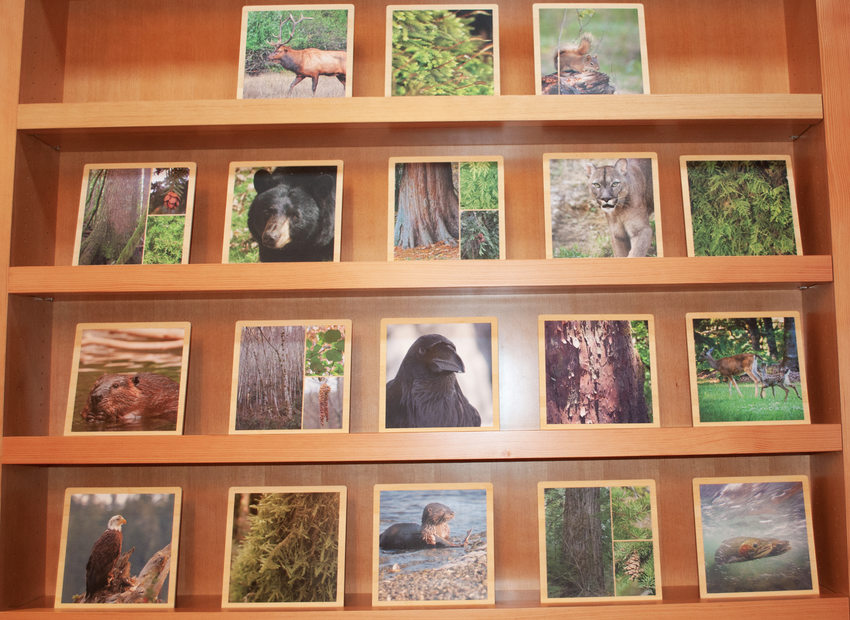 Wildlife cards on display at the welcome center.