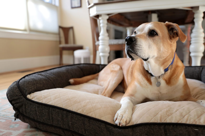 a dog resting at home in a dog bed
