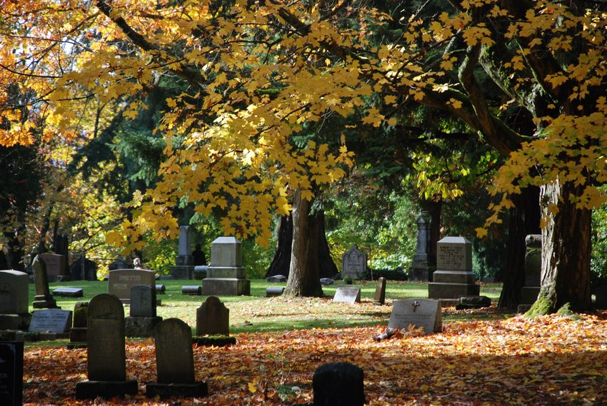 Fall foliage at Lone Fir Cemetery