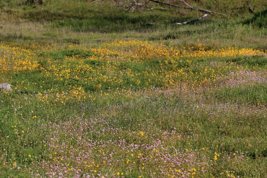 photo of field of wildflowers at Cooper Mountain Nature Park
