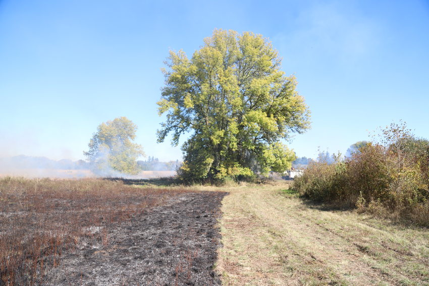 photo of fire line with half burned field and half nonburned field