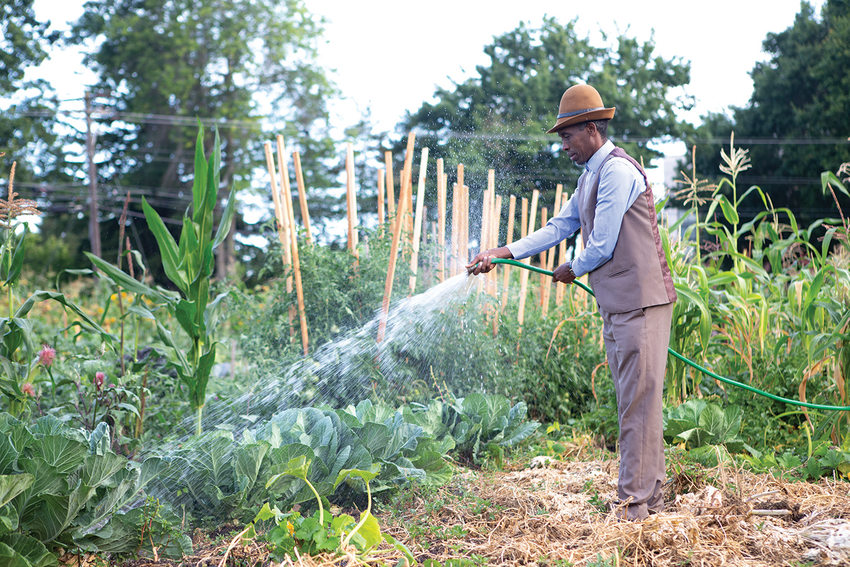 A Black man wearing a suit waters his cabbages in a community garden.