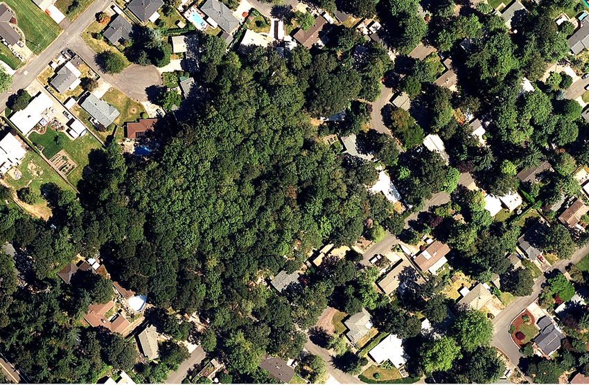 An aerial photograph of a neighborhood with dozens of trees.