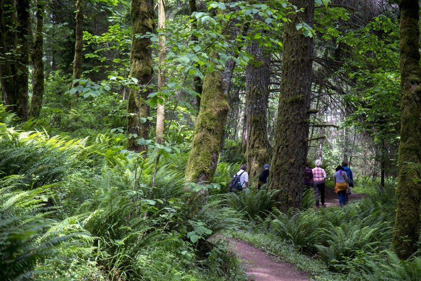 A small group of people walks along a path that weaves through ferns and moss-covered trees.