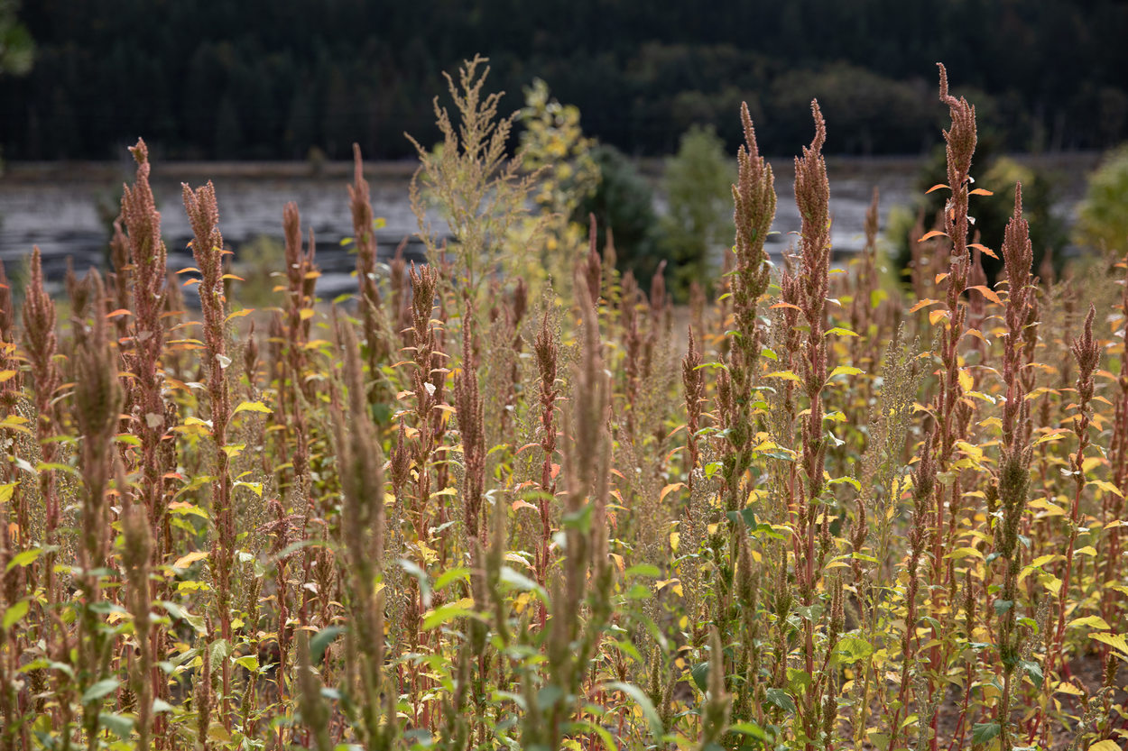 Tall grasses at Killin Wetlands Nature Park