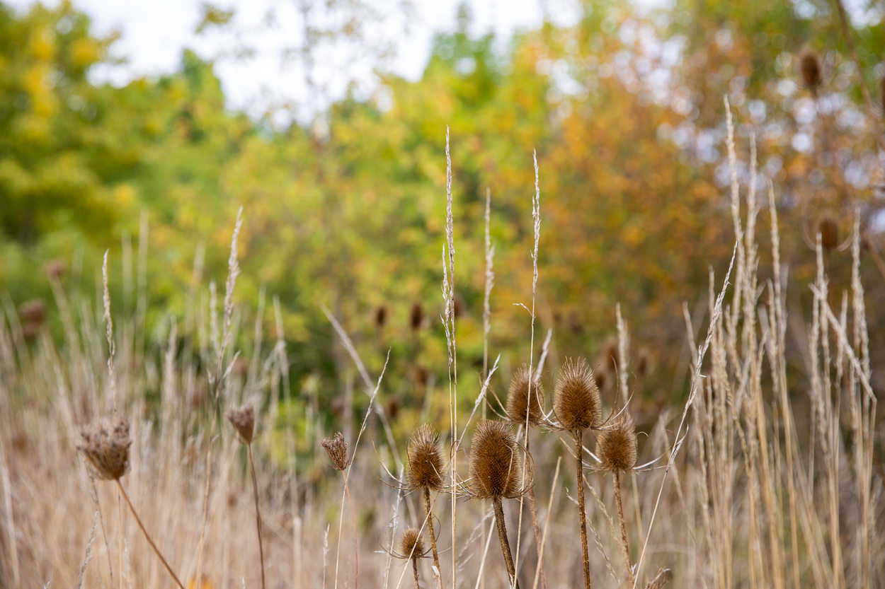 Prairie grass in the fall.