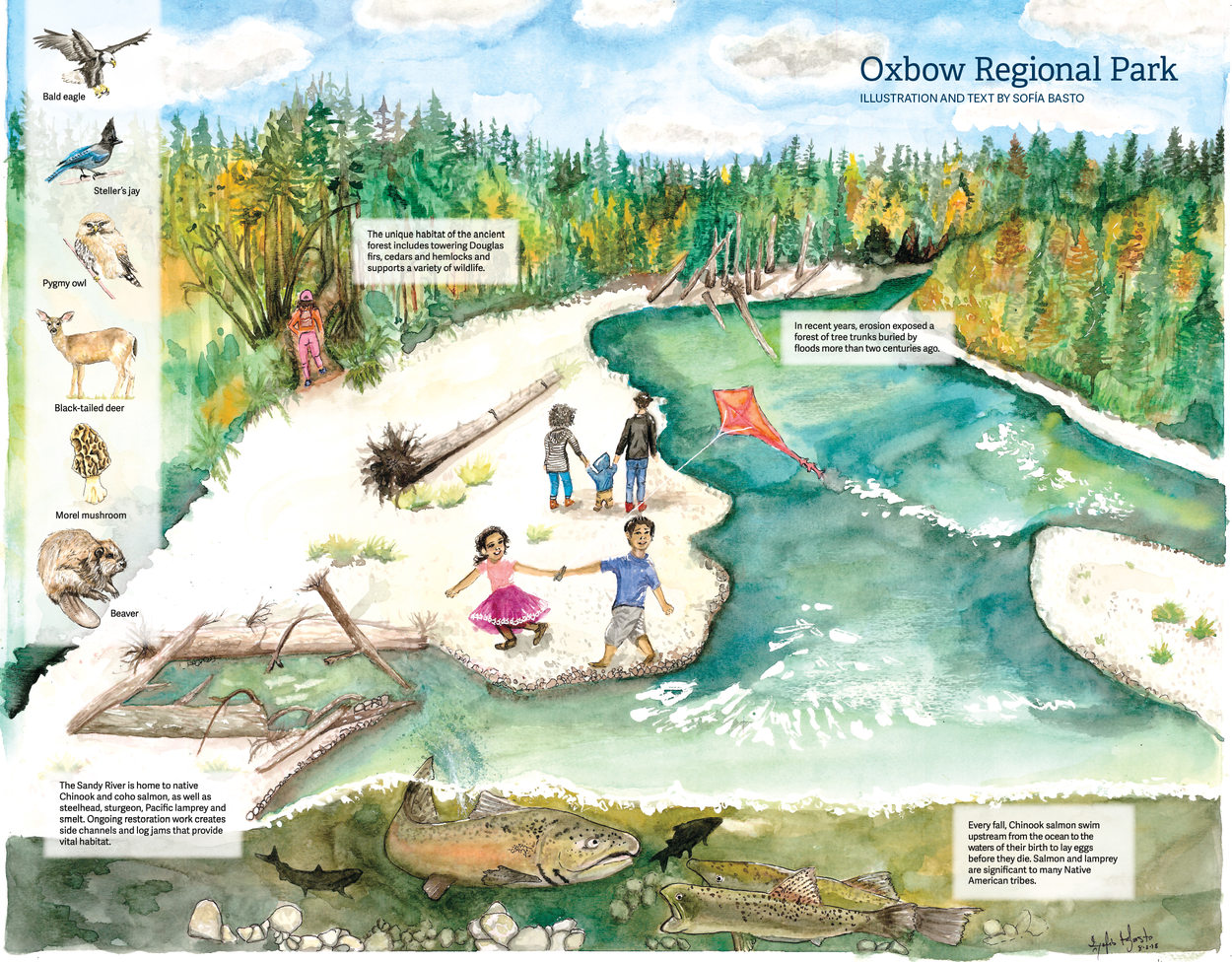 watercolor illustration of Oxbow Regional Park by Sofía Basto
