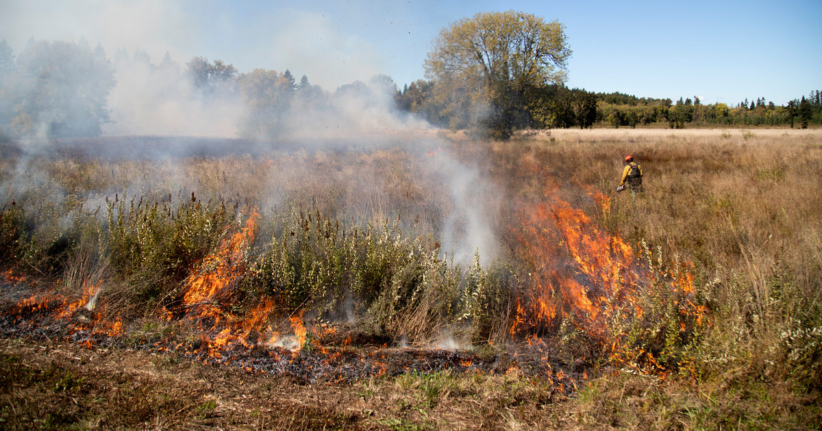 Restoring fire: prescribed burn at Quamash Prairie reconnects land,