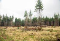 photo of native grasses at Chehalem Ridge