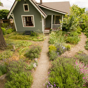 photo of a house and yard with native plants