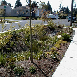 photo of a bioswale