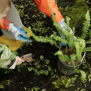 photo of a child planting a fern