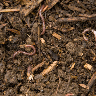 photo of soil and worms
