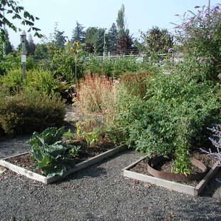 photo of a demonstration garden