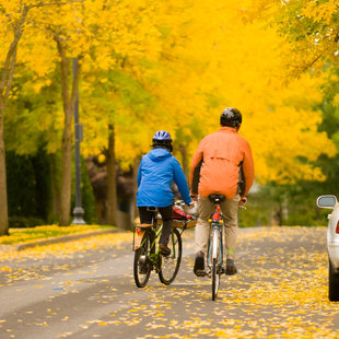 photo of bicycles in fall color