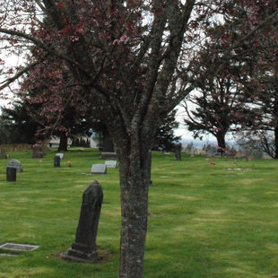 photo of trees at Mountain View Corbett Cemetery