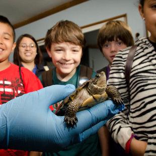 photo of children gathered around a turtle