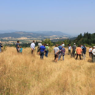 The view from Wapato Lake viewpoint at Chehalem Ridge