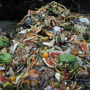 photo of a pile of food waste