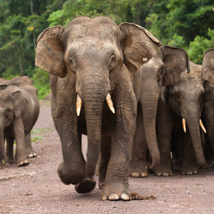 photo of elephants in Borneo