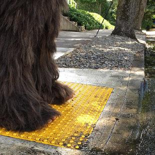 Sasquatch at a crosswalk
