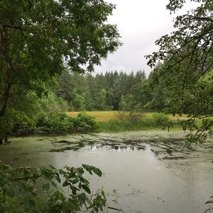 photo of kolk pond at new Tonquin acquisition