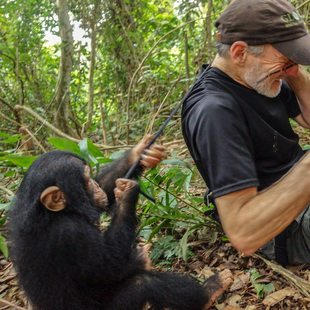 Wildlife photographer with camera in hand and an ape behind him in forest