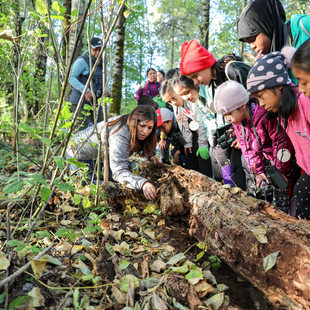 Group of children looking at log in nature