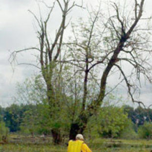 person in kayak paddling on water near a tree