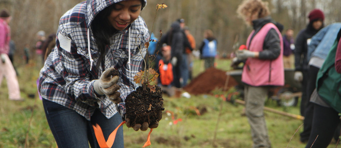 A volunteer plants a tree at the Sandy River delta.